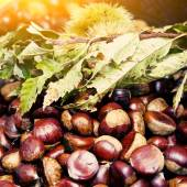 Chestnuts and hedgehog with leaves — Stock Photo
