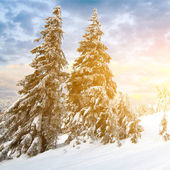 Sunny day in winter mountains — Fotografia Stock