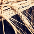 Ears of barley for brewing beer — Stock Photo #63238855