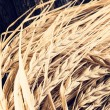 Ears of barley for brewing beer — Stock Photo #63238863