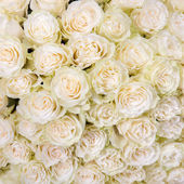 Abstract background of white roses — Stock Photo