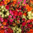 Roses background. — Stock Photo