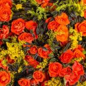 Róże tło. — Zdjęcie stockowe