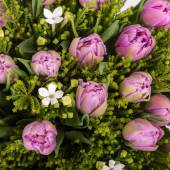 Purple tulip  — Stock Photo