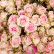 Pink roses background — Stock Photo #53873147