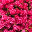 Pink roses background — Stock Photo #53873149