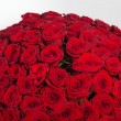 Plenty red natural roses background — Stock Photo #54945321