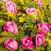 Arka plan bir çiçek. yakın çekim. — Stok fotoğraf