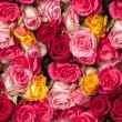 Seamless roses background — Stock Photo #64016787