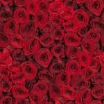 Seamless roses background — Stock Photo #64016819