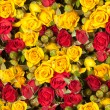 Seamless roses background — Stock Photo #64016821