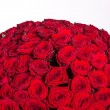 Red roses background - natural texture of love — Stock Photo #72176639