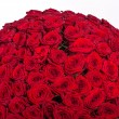 Red roses background - natural texture of love — Stock Photo #73540143
