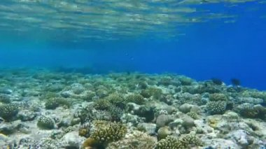 Coral reef, colorful fish groups — Stock Video