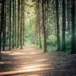 Sunlight In Green Coniferous Forest — Stock Photo #76455045