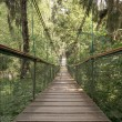 Rope walkway through the treetops in a rain forest — Stock Photo #79686840
