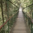 Rope walkway through the treetops in a rain forest — Stock Photo #79812246