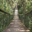 Rope walkway through the treetops in a rain forest — Stock Photo #79969164