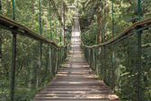 Rope walkway through the treetops in a rain forest — Stock Photo