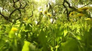 Heldere levendige groen gras close-up — Stockvideo