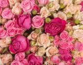 玫瑰花丛,花毛茛叶片作为背景 — 图库照片