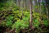 Cárpatos montanhas, ucrânia — Foto Stock