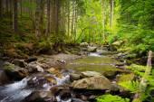 Karpaten-Fluss — Stockfoto