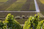 Wineyard in France — Stock Photo