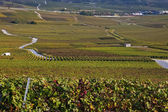 Wineyards in France — Stock Photo