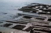 Oyster farm in Cancale — Foto Stock