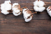 Cotton branch on the wooden table — Stock Photo