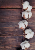 Cotton brunch on the wooden background — Stock Photo