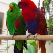 Two parrot — Stock Photo #53005967