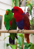 Two parrot — Stock Photo