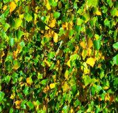背景の秋 — ストック写真