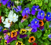 Flowerses background — Stock Photo