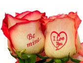 Kytice růžových růží — Stock fotografie