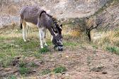 Donkey in the mountains, Turkey — Stock fotografie