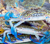 Blue crab market — Stock Photo