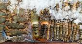 Assorted lobster and crabs — Stock Photo