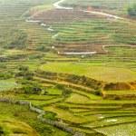 Rice fields village SAPA, Lao Cai, Vietnam — Stock Photo #75490349