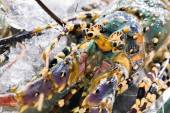 Lobster in Barbecue Grill cooking seafood. — Stock Photo