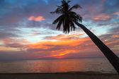 Palms silhouette sunset — Stock Photo