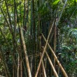 Bamboo green Forest — Stock Photo #78161596