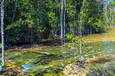 Mangrove forest at Krabi in Thailand — Stock Photo