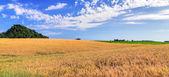 Wheat field ripe grow, — Stock Photo