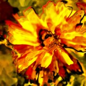 Art floral vintage blurred background with red and yellow aster — Stock Photo