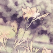 Art floral vintage sepia watercolor background with light coral  — ストック写真