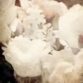 Umění květinové vinobraní světla sépie rozmazané pozadí s bílou ros — Stock fotografie