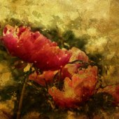 Art colorful grunge floral watercolor paper textured background  — Fotografia Stock